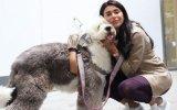 Bir Köpeğimin Aylık Kuaför Masrafı 600 Lira  Ebru Şancı