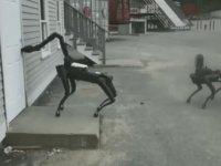 Terminatör Filmi Gerçek Oluyor, Robot Köpek Yolda