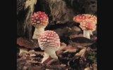 Mantar Türlerinin Büyüme Görüntüleri Time Lapse