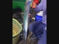 Ayna Gibi Balık Tutan Balıkçı