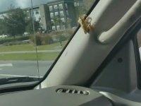 Arabasına Giren Kurbağadan Ödü Patlayan Sürücü