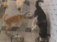 Egitimsiz, Disiplinsiz Köpeklerin Mama Saati