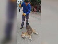 Sokak Köpeğini Süpürgeyle Keyiflendiren Temizlik Görevlisi