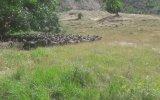 Keçilere Askeri Eğitim Veren Çoban