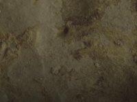 Dünyanın En Eski Sanat Eserleri Bulundu: 44 Bin Yaşında! - Dw Türkçe
