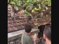 Gözlüğü Maymuna Kaptıran Turist