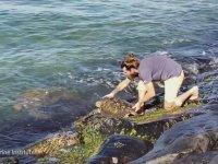 Kayaların Arasına Sıkışan Deniz Kaplumbağasını Kurtarmak