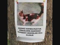 Kayıp Kedi İle Sahibinin Buluşma Anı