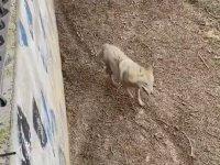 Kurdun Hayvanat Bahçesinde Çizdiği Şekil