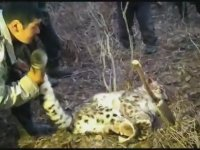 Yakaladıkları Leoparla Makara Yapan Kırgızlar