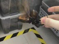 Atlas Böceği