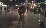 Hindistan Sokaklarında Gezen Gergedan