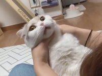 Kedilere Hap Nasıl Yutturulur?