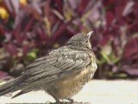 Bir Kuşun Ölüm Anı