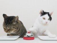 Zile Bastıkça Mamayı Kapan Kediler