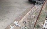 Akülü Arabasıyla Kediye Çarpıp Kaçan Kız Çocuğu
