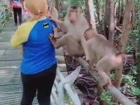 Maymundan Tekmeyi Yiyen Kadın