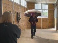 Coronasavar Şemsiye