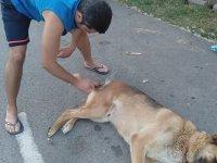 Sokak Köpeğini Tımarlayan Dayı
