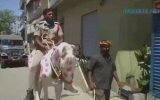 Corona Virüs Desenli At ile Sokaklarda Dolaşan Hintli Polis