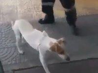 Hastanedeki Sahibini Bırakmayan Köpek