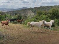 Adalar'da özgür atlar zamanı - DW Türkçe