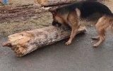 Miyop Köpek