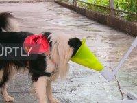 İran'da Köpeklerin Koronavirüslü Hastaları Tespit Etmek İçin Eğitilmesi