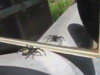 Aynada Kendisini Gören Örümceğin Dans Etmesi