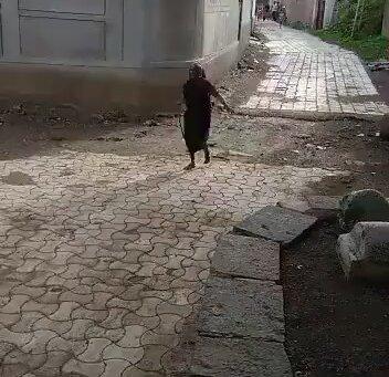 Kobrayı Doğaya Salan Hayvansever Hintli Nine