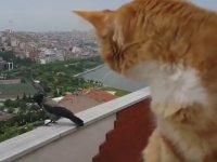 Kuzgun ile Kedinin Sohbeti