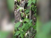 Doğaya Salınan Piton Yılanı
