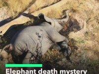 Güney Afrika'da Yüzlerce Filin Gizemli Şekilde Ölmesi