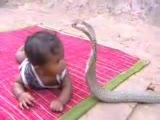 Çılgın Çocuk Ve Kobra Yılanı