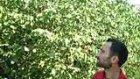 Samsun Çarşamba Fındık Ağası