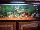 balıklarım gırgıt 2