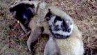kedi köpek kardeşliği