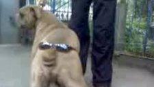 gözlüklü köpek :))
