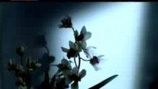 Gökhan Özen - Kalbim Seninle (Pop Arşiv)