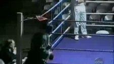 çaylak boksör:))