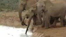 yavru fili kurtarma seferberliği