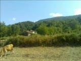 Sinop Gerze Sazak Köyü