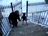 marifetli köpek :))