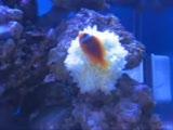anemon ile ilk buluşma