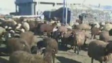 Köy Videosu