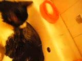 musluk suyu ile yıkanan kedi