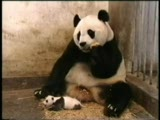 pandalarda korkar :)