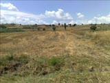 (Koruoba Lı Bu)koruoba Köyü