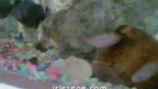 zebra balığı