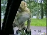 hayvanlarin komik halleri